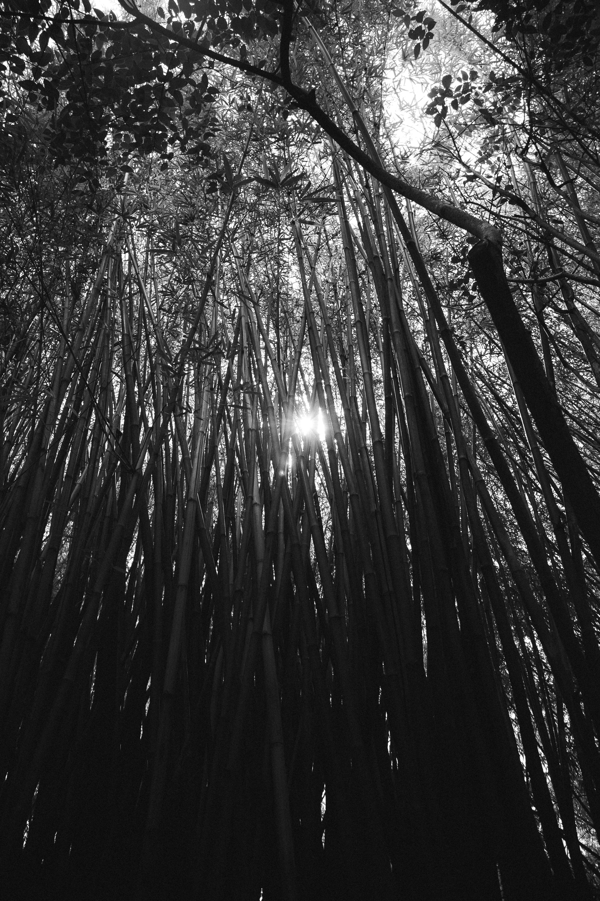 Free stock photo of black and white, light, nature