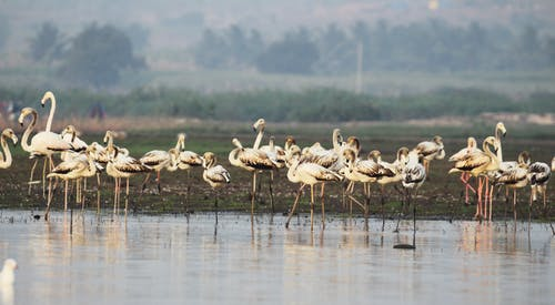 Ilmainen kuvapankkikuva tunnisteilla #followback #natgeotravel #photography #camera, #indian_photographers #travelgram # colors # india_ig, #instafollow #tagforlikes, #thrillophilia #birds