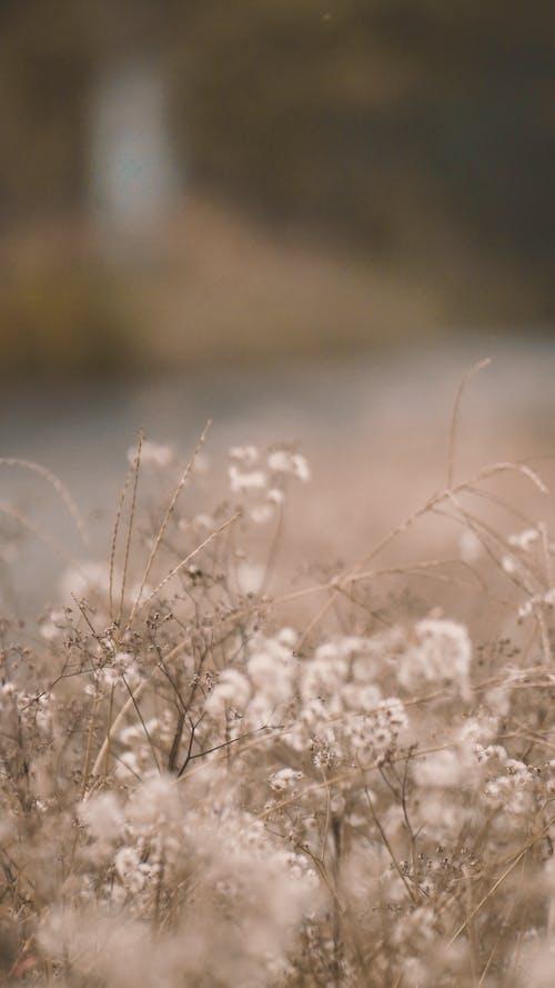 คลังภาพถ่ายฟรี ของ ต้นไม้, ธรรมชาติ, พืช