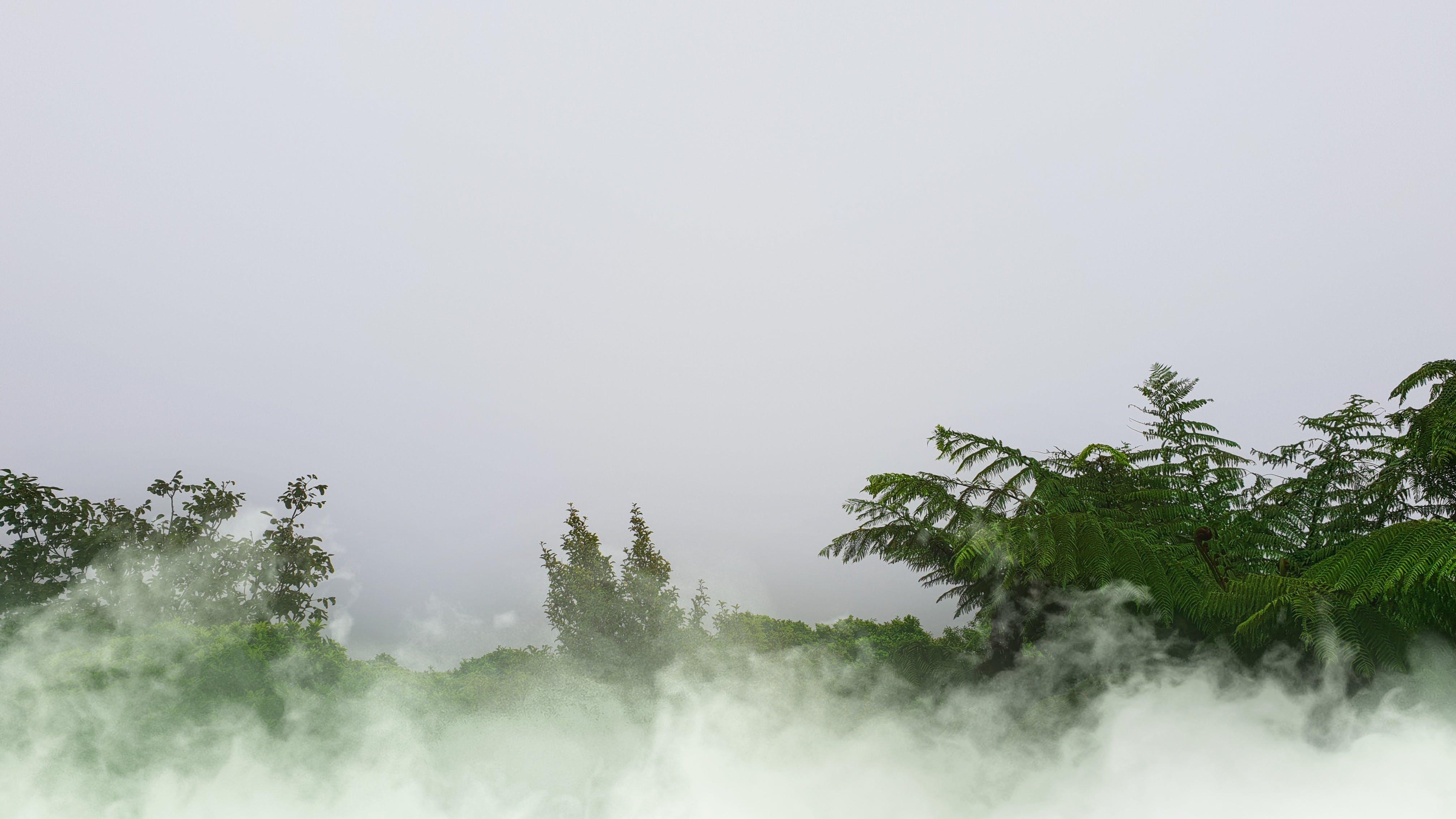 Kostenloses Stock Foto zu bäume, baumwipfel, bewaldung, bewölkt