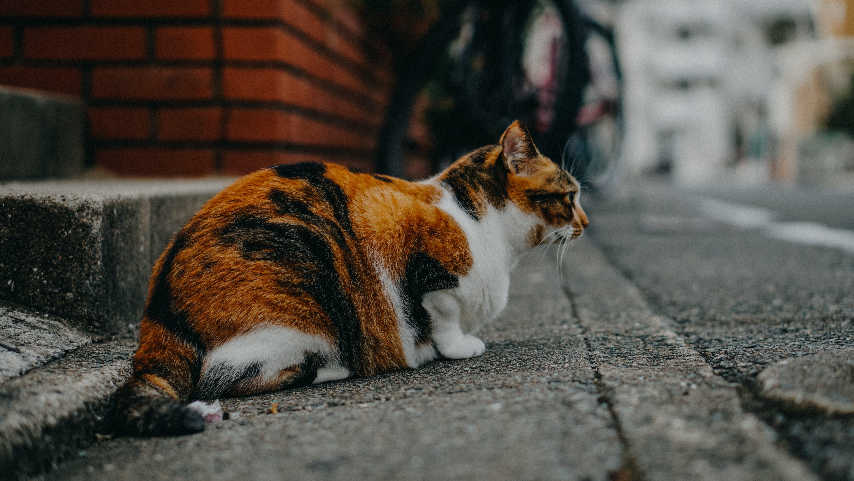 Cat Sitting Near Street