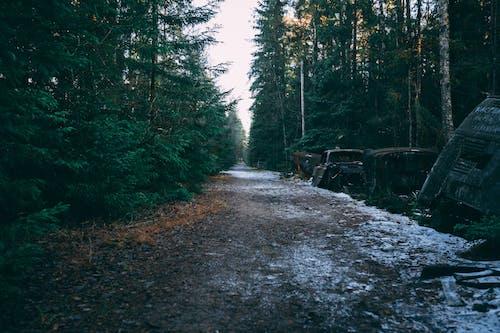 Foto d'estoc gratuïta de arbres, bosc, brossa, carretera