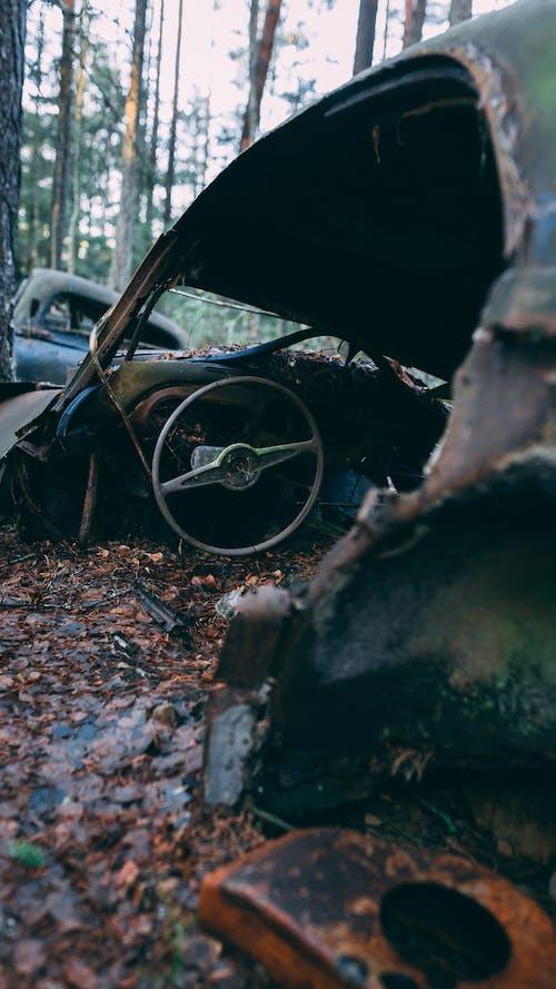 Základová fotografie zdarma na téma auto, interiér vozu, les, odpad