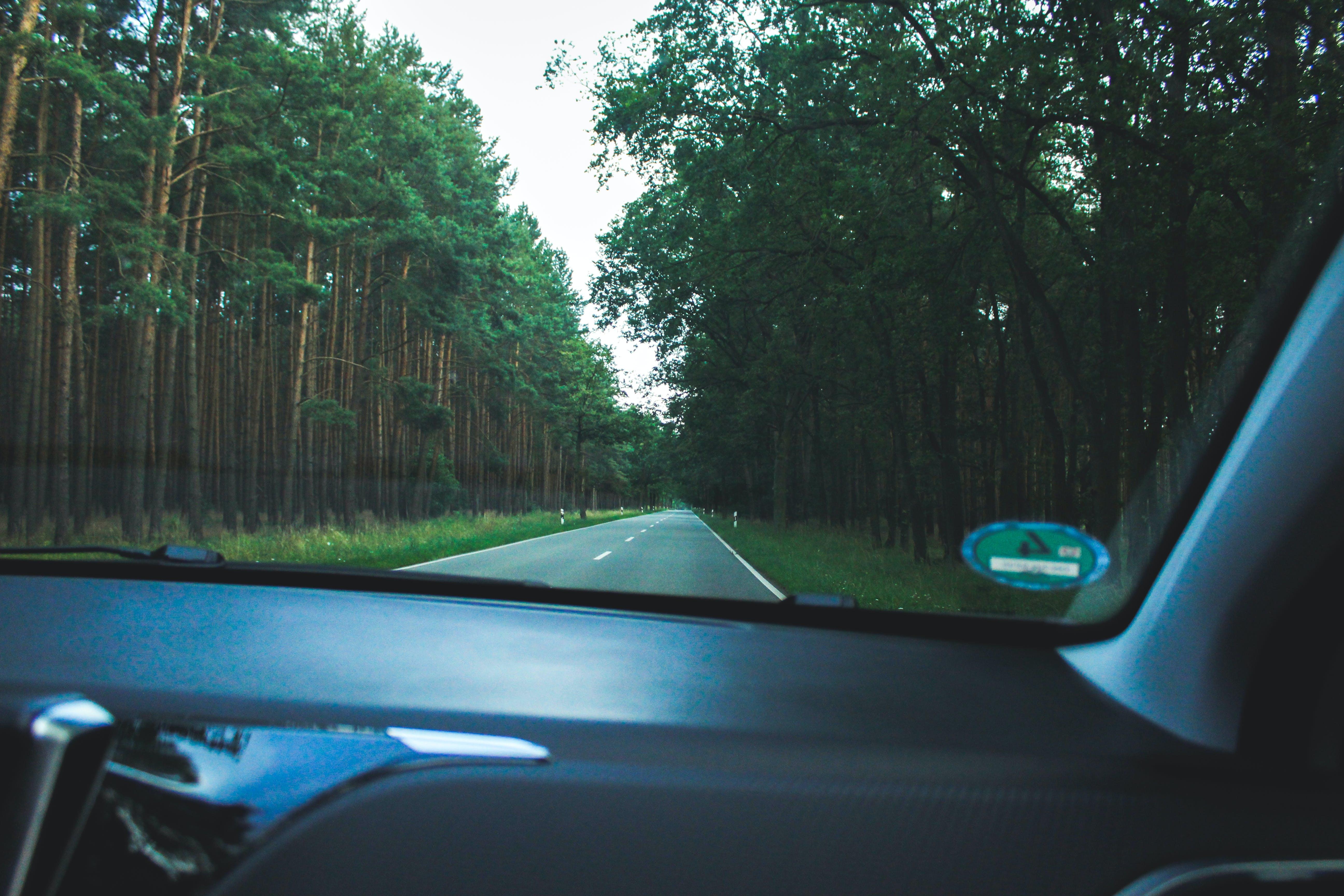 bewaldet, landschaft