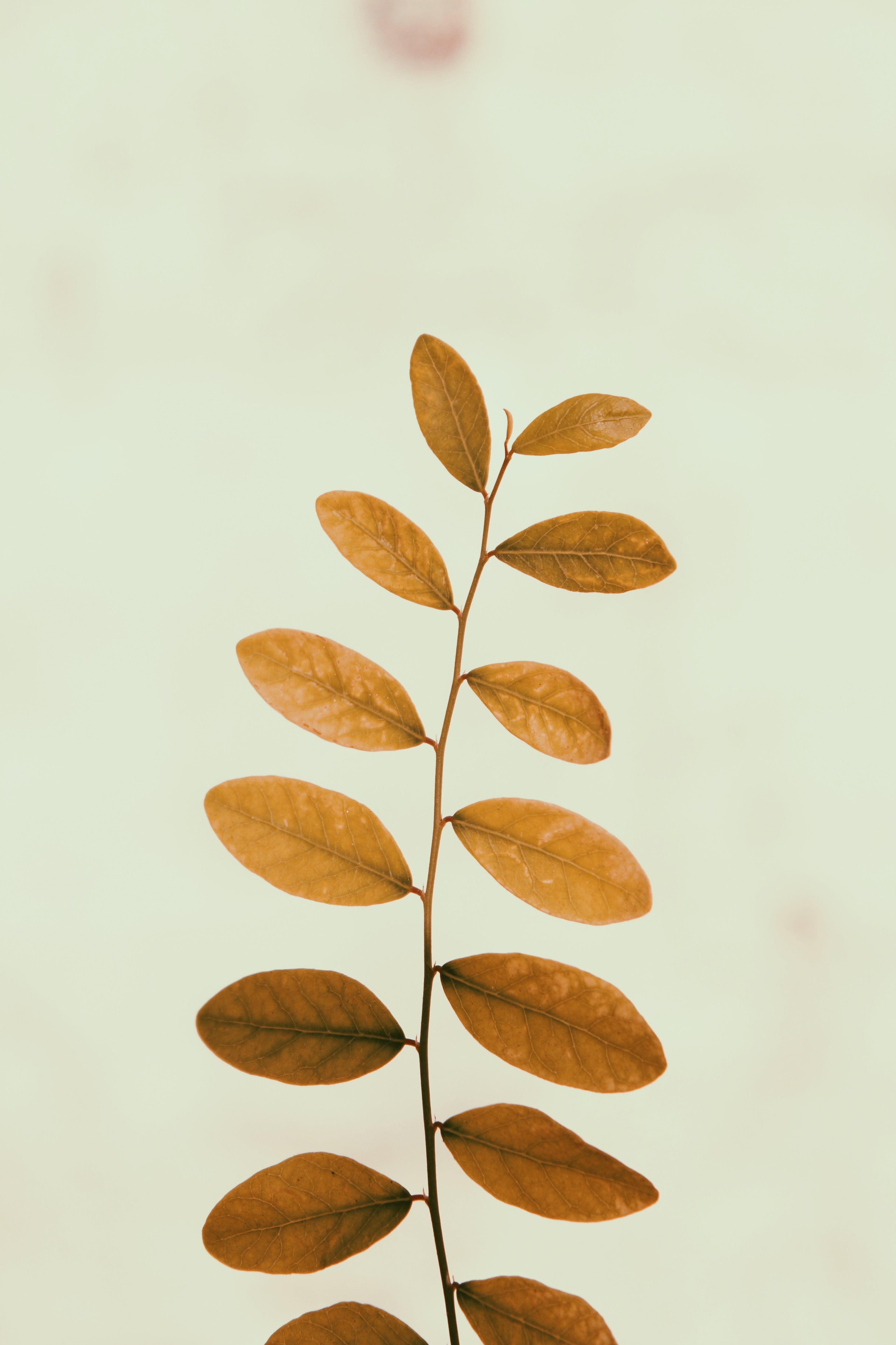 Brown Leafed Plant