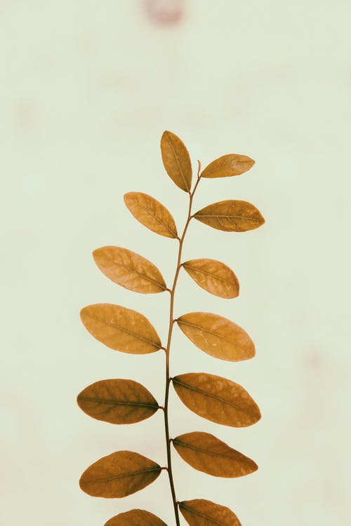 Gratis arkivbilde med anlegg, blader, makro