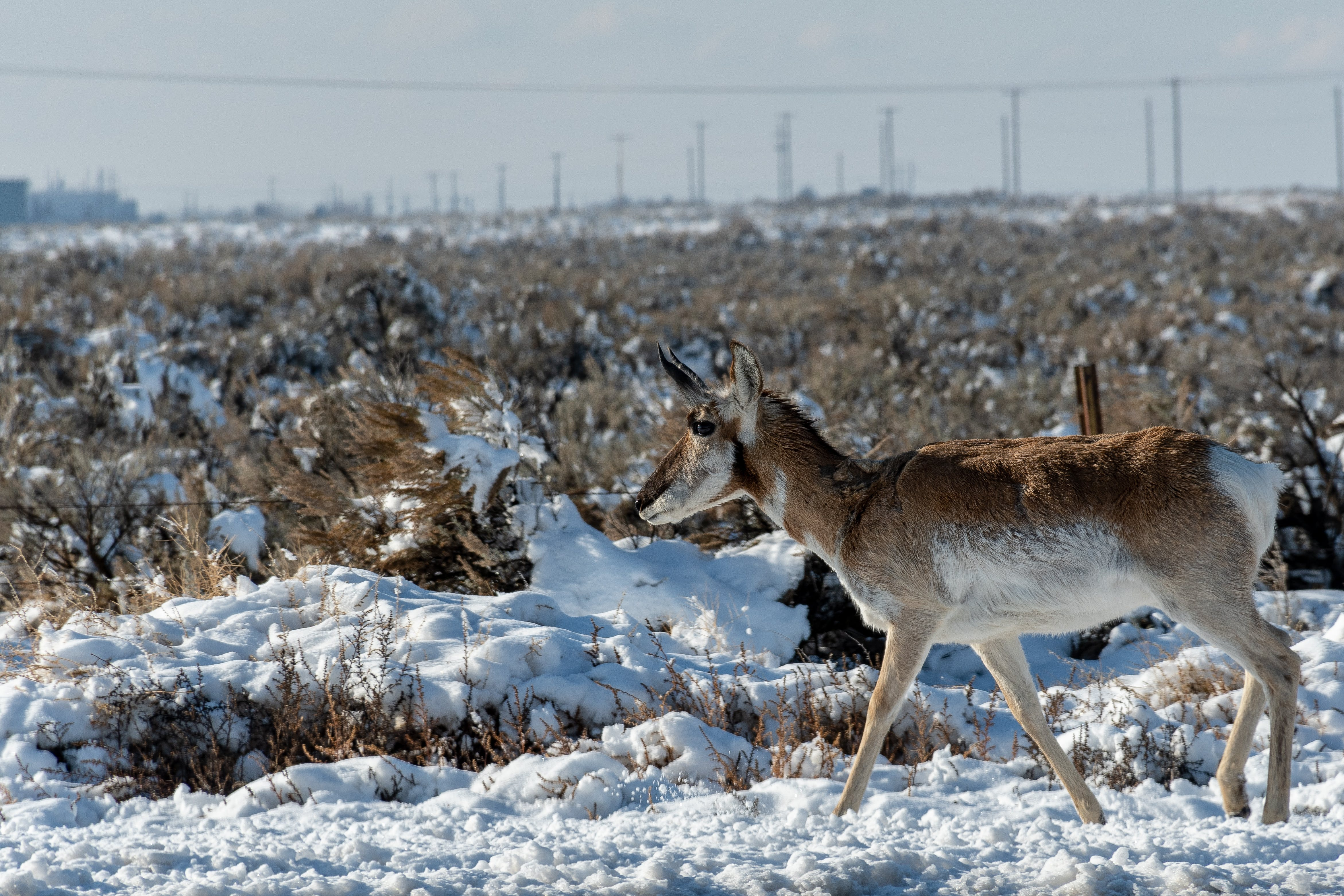 Brown and White Deer on Snow Ground