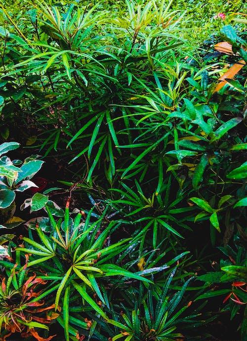 Kostenloses Stock Foto zu grün, grüne blätter, natur, natur wallpaper