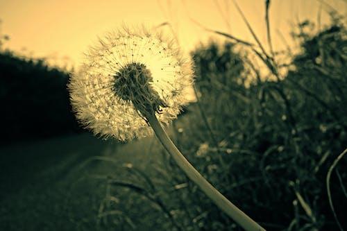 Photos gratuites de brouiller, centrales, fleur, flore