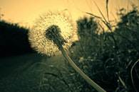 blur, plants, flower