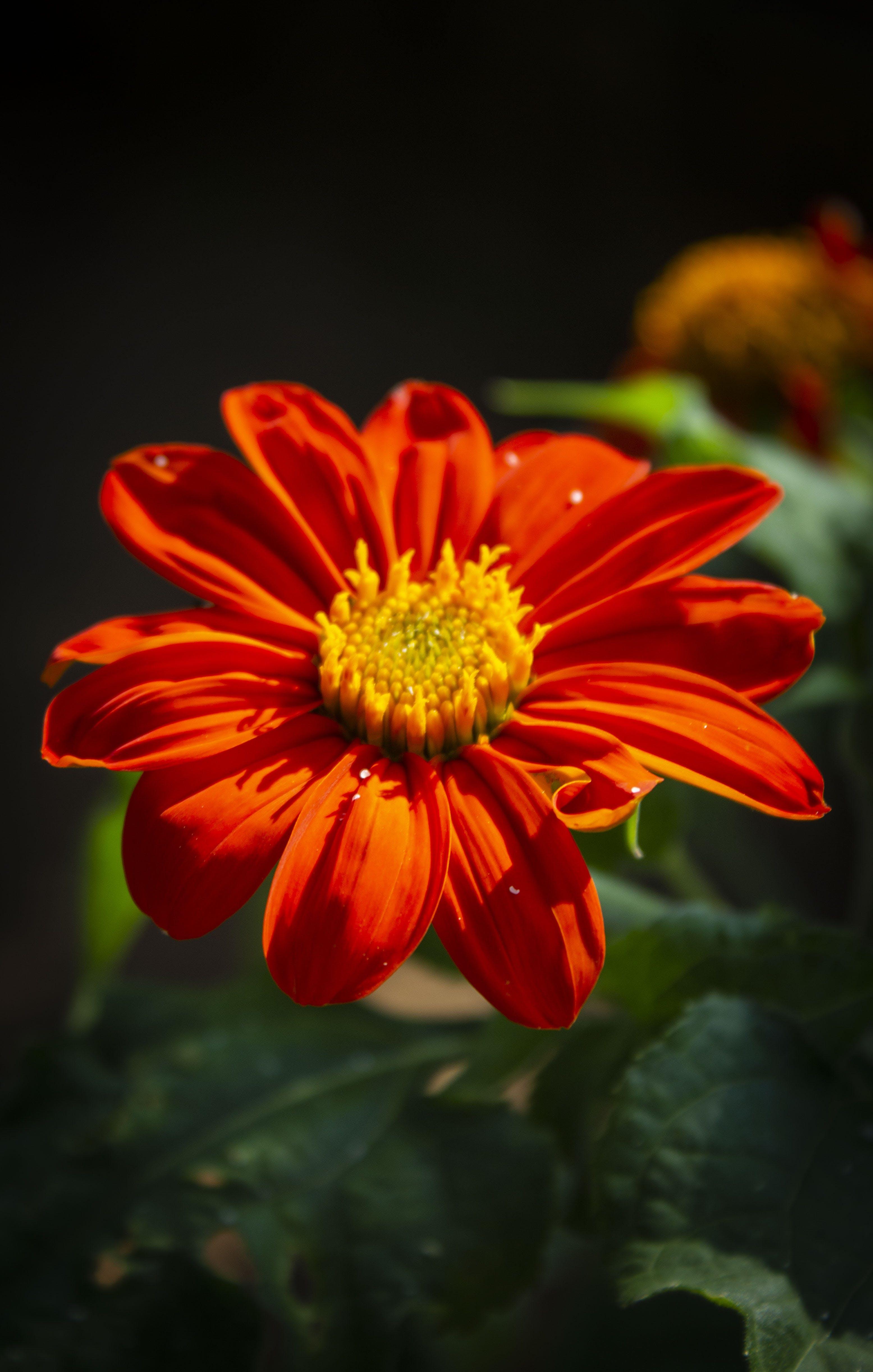 Gratis lagerfoto af blomsterarrangement, springe ud