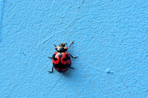 Free stock photo of bugs, ladybug, ladybugs, minimalism
