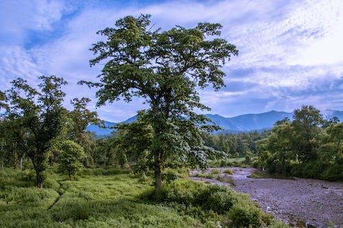 尼泊爾 的 免费素材照片