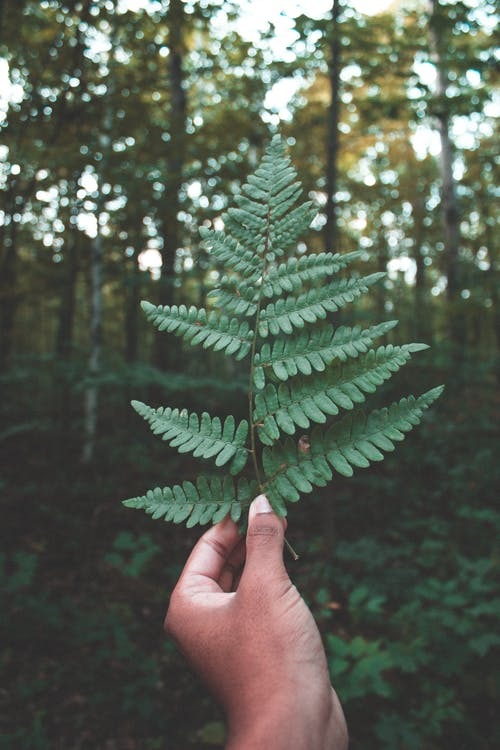 Free stock photo of Black hand, earth, fern, forest