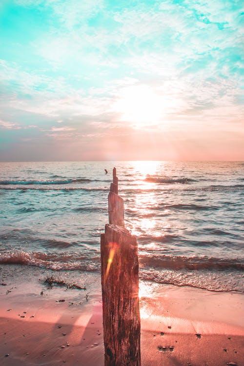 天性, 天空, 岸邊, 日出 的 免費圖庫相片