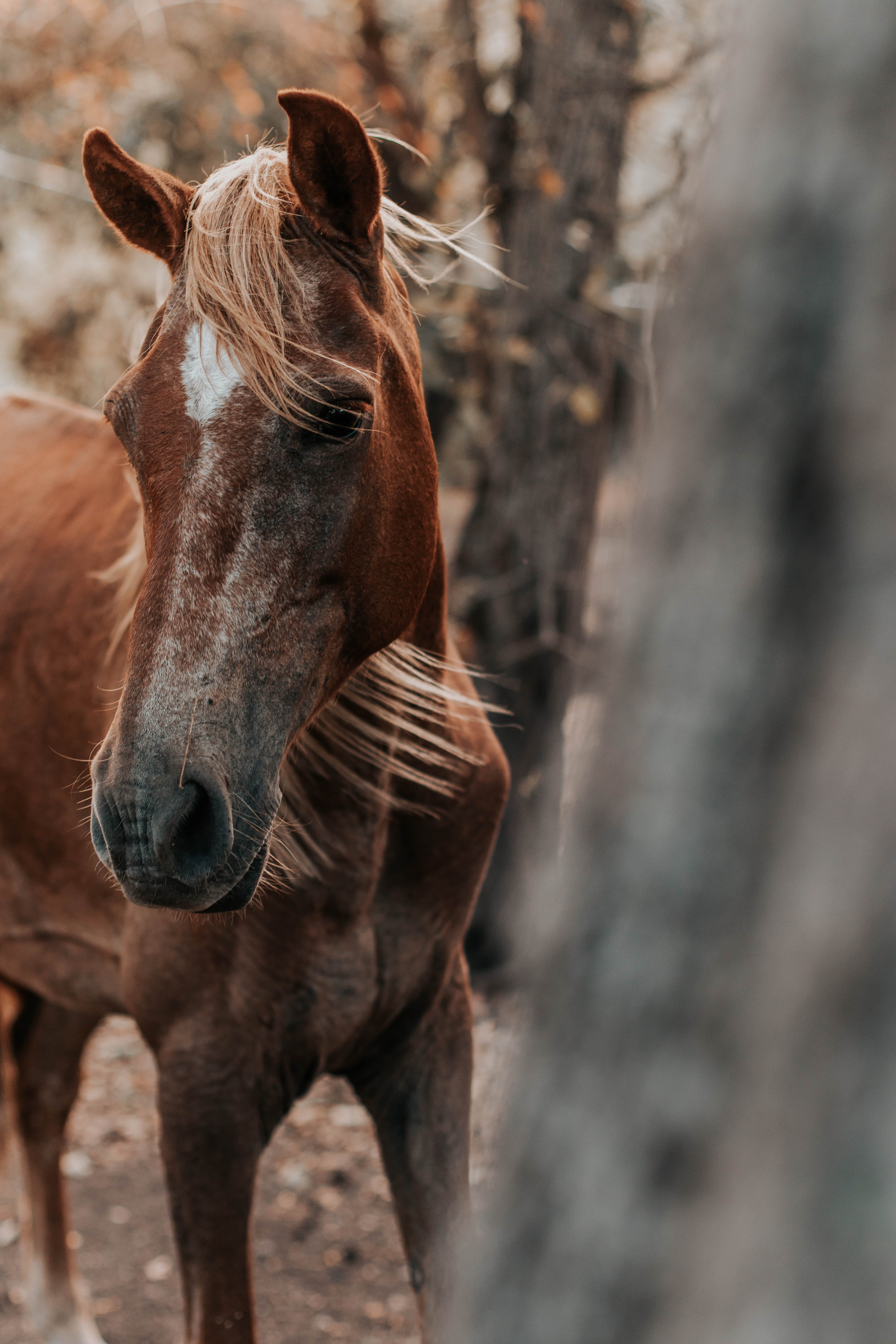 Selective Focus Photo of Horse