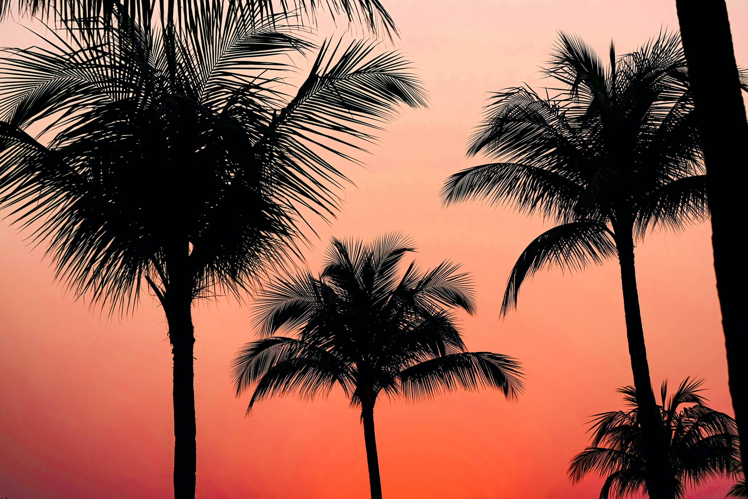 Silhoutte Photography of Coconut Tree