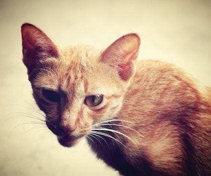 Free stock photo of animal, pet, eyes, blur