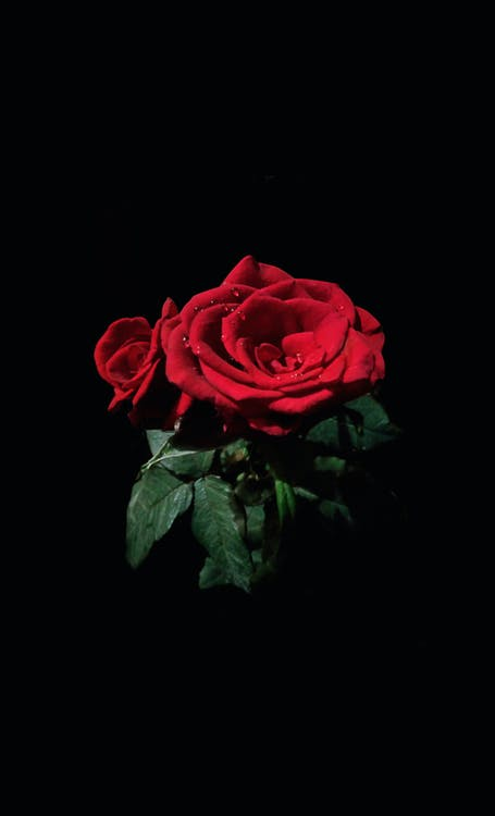 ciemność, czerwona róża, czerwone róże