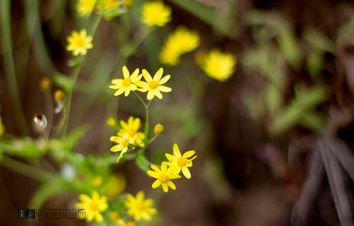 Ilmainen kuvapankkikuva tunnisteilla #kukat#