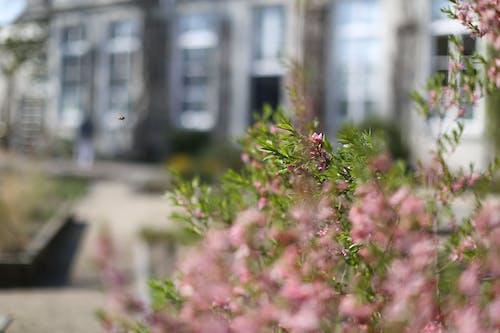 arı, bulanıklık, çiçek, Çiçekler içeren Ücretsiz stok fotoğraf