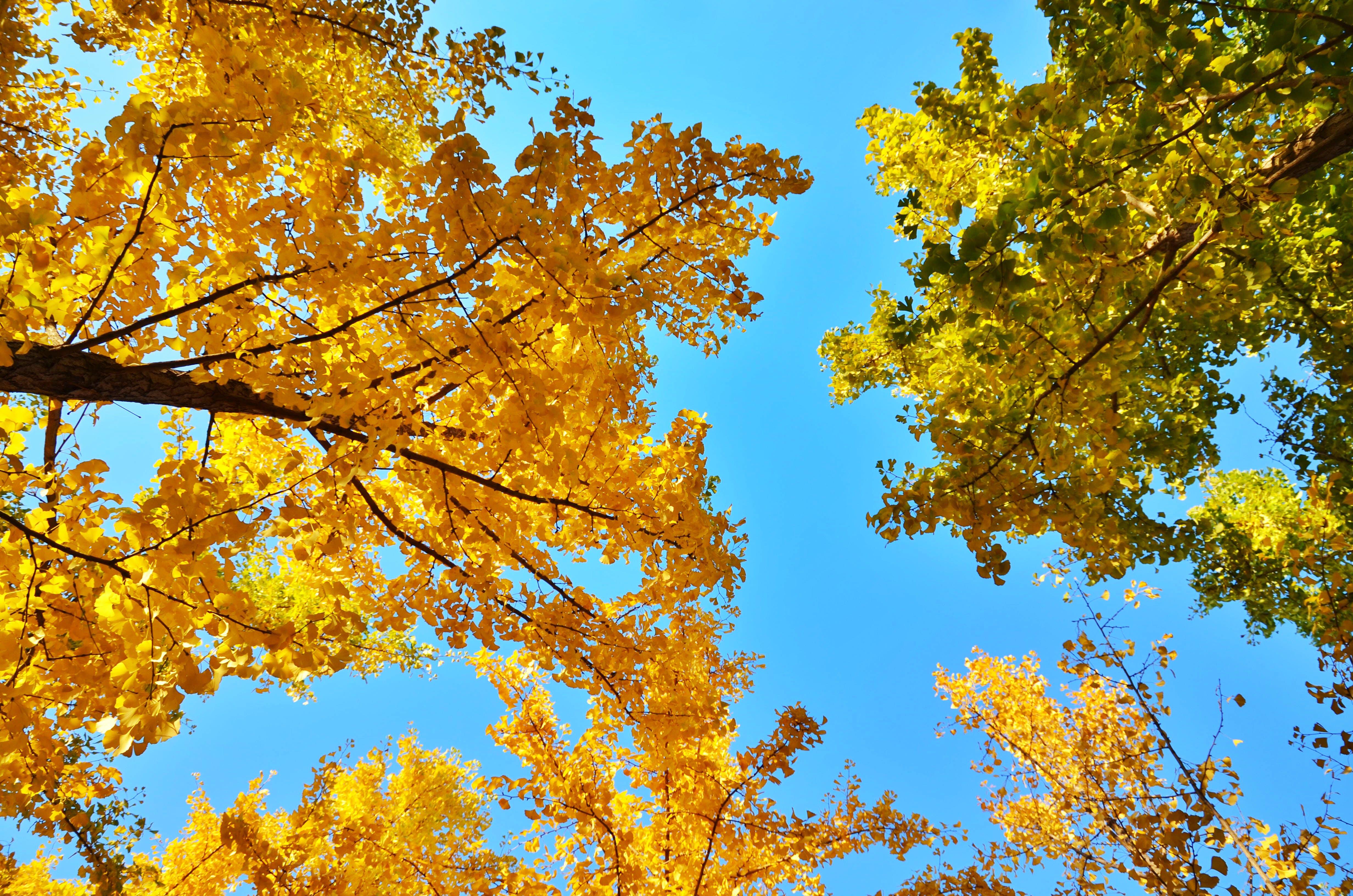 Ingyenes stockfotó aranysárga, kék ég témában