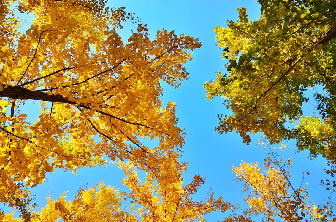блакитне небо, дерево, жовтогарячий