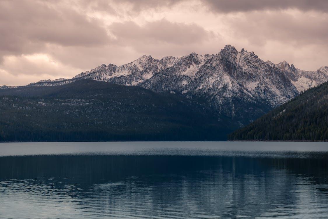 arbres, bord de lac, eau