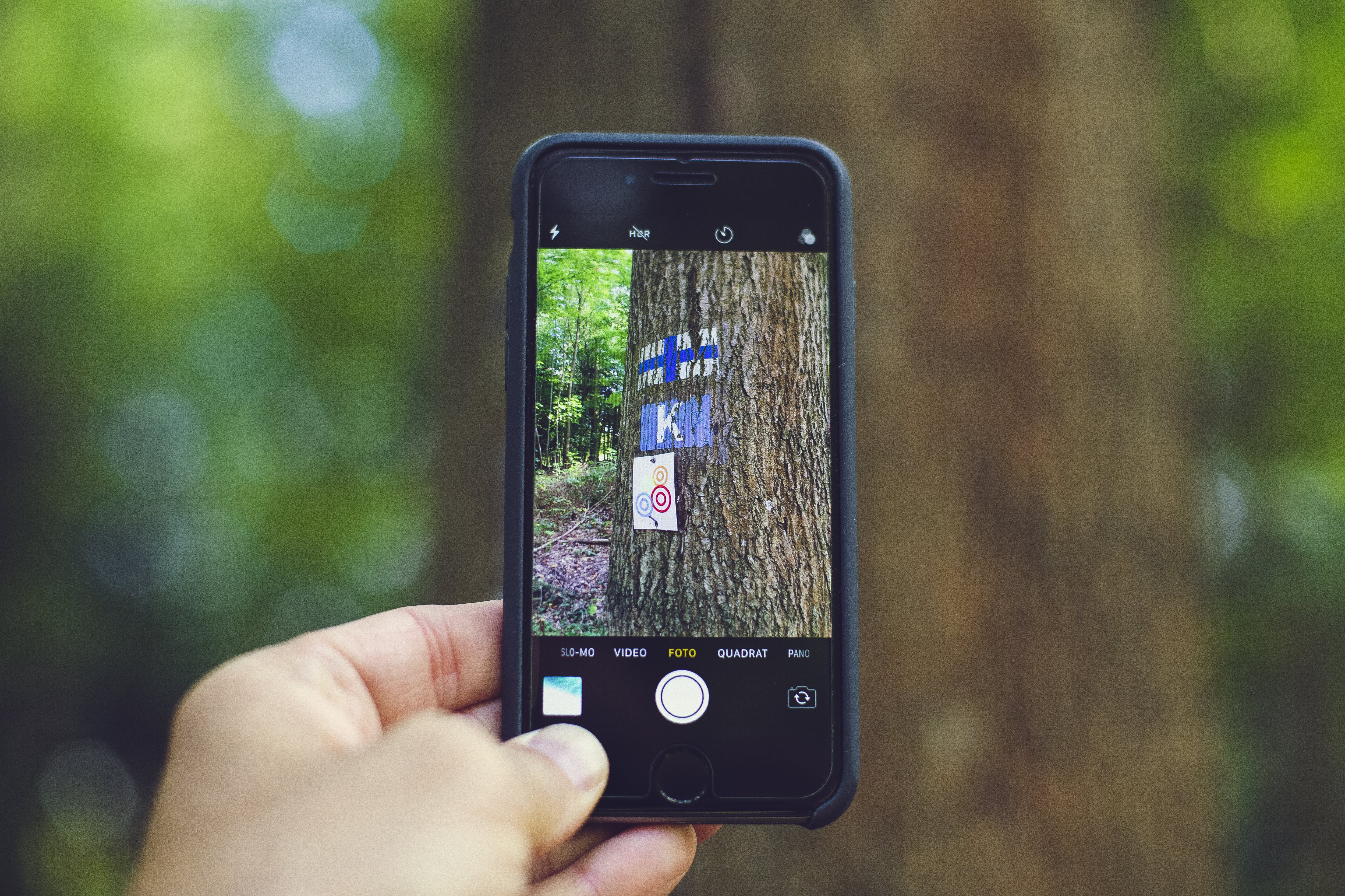 Person Taking Picture of Tree Trunk