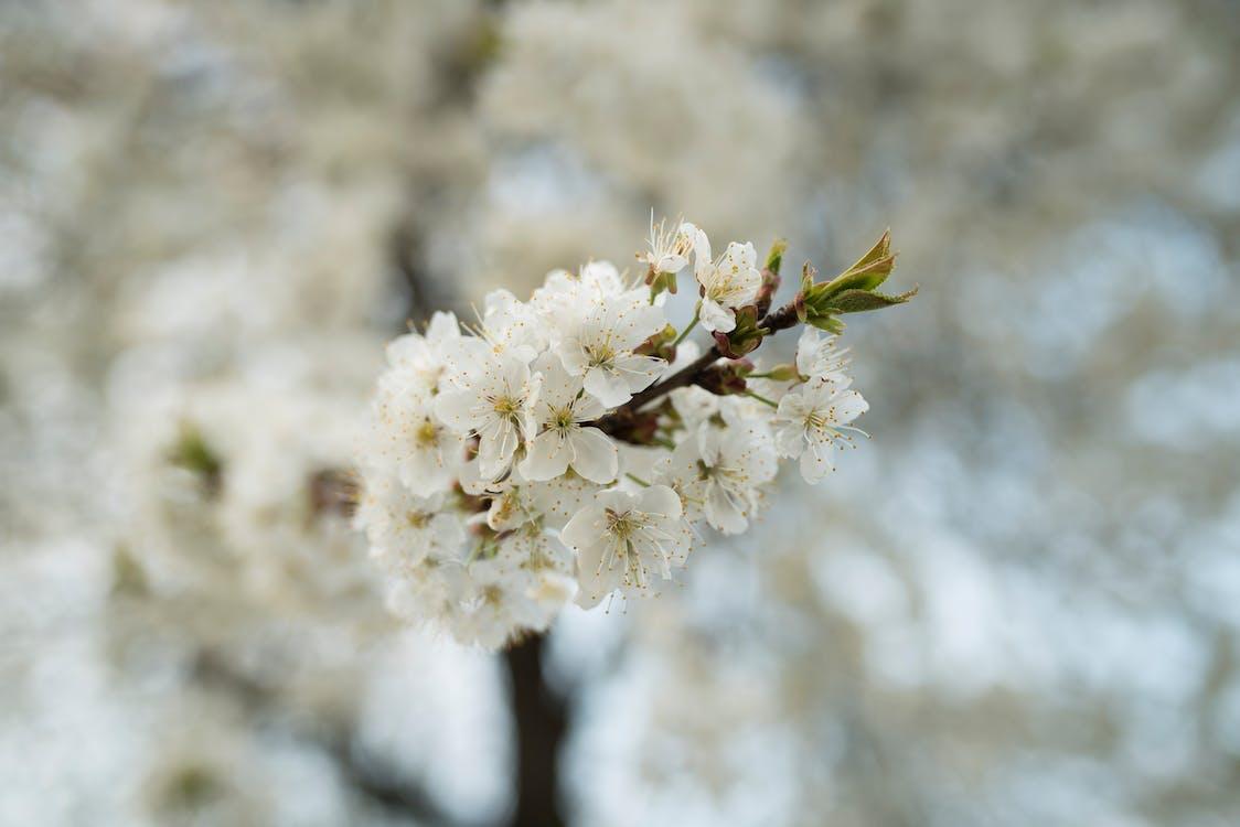 colores, Flores de primavera, primavera
