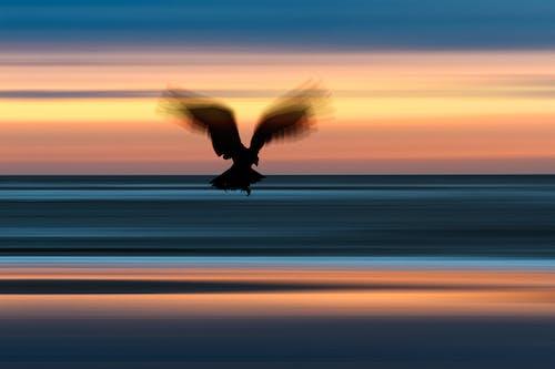 Základová fotografie zdarma na téma moře, pohyb, predátor, večerní obloha