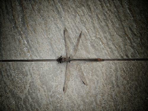 Foto stok gratis naga terbang, sayap, serangga, simetri
