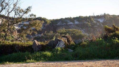 Ingyenes stockfotó fák, Látvány, sziklák, tájkép témában