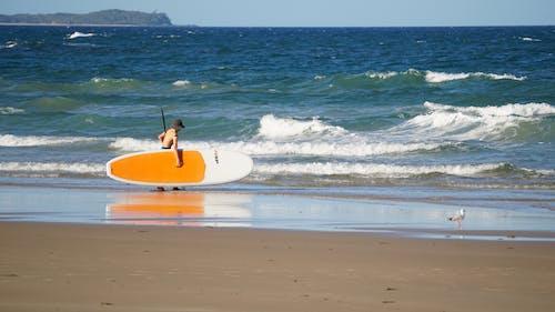 Ingyenes stockfotó homok, hullámok, paddleboard, strand témában