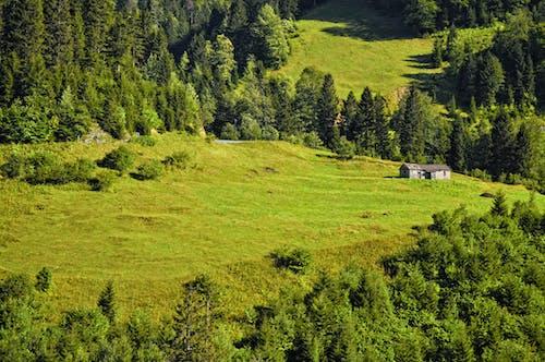 Бесплатное стоковое фото с джунгли, зеленый, пейзаж, природа