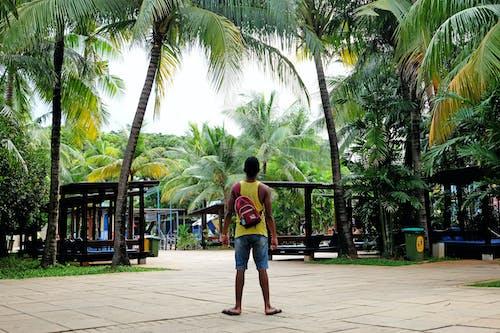 Безкоштовне стокове фото на тему «безтурботний, відпустка, дерева, дозвілля»
