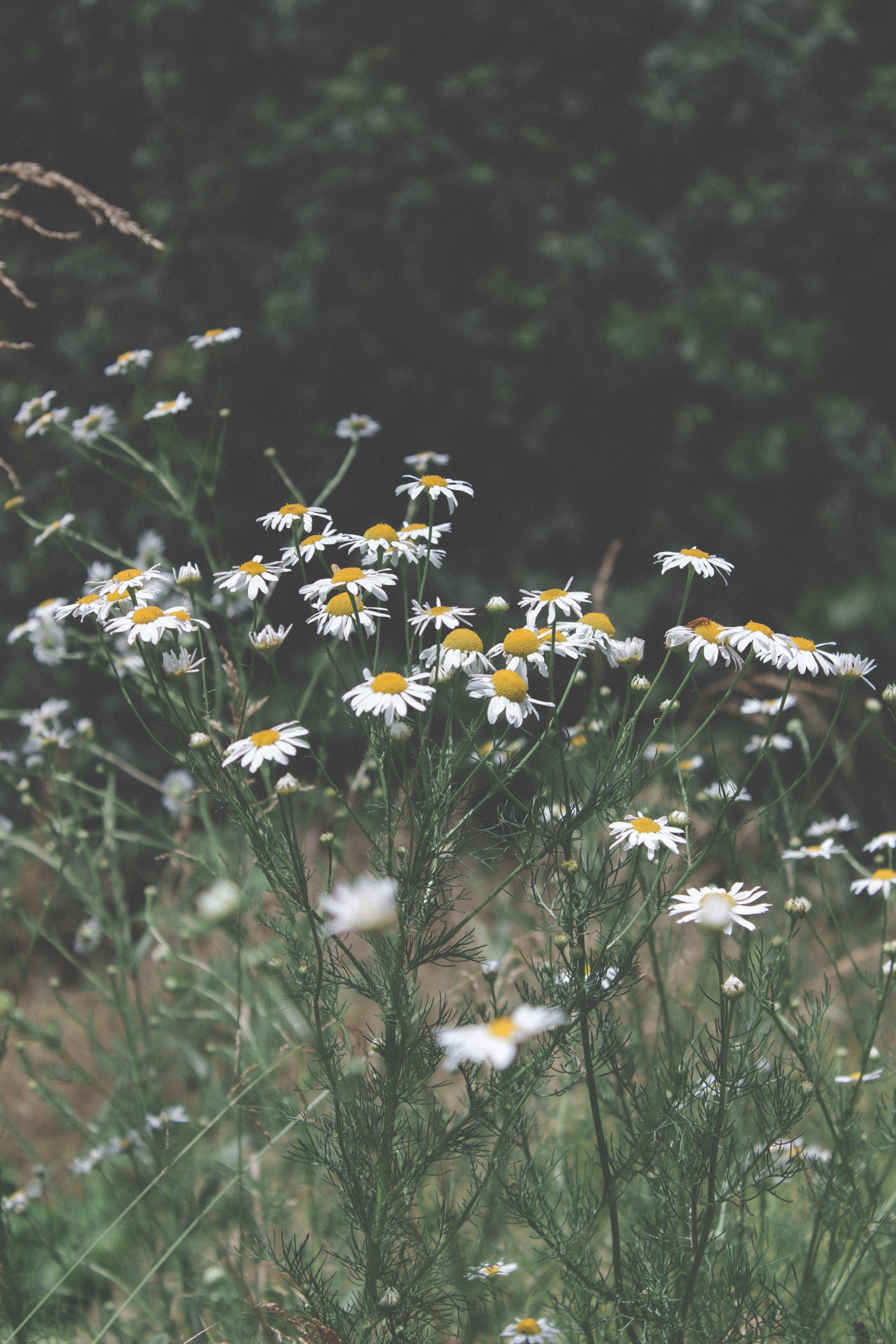 Fotos de stock gratuitas de amarillo, blanco, flor, flora