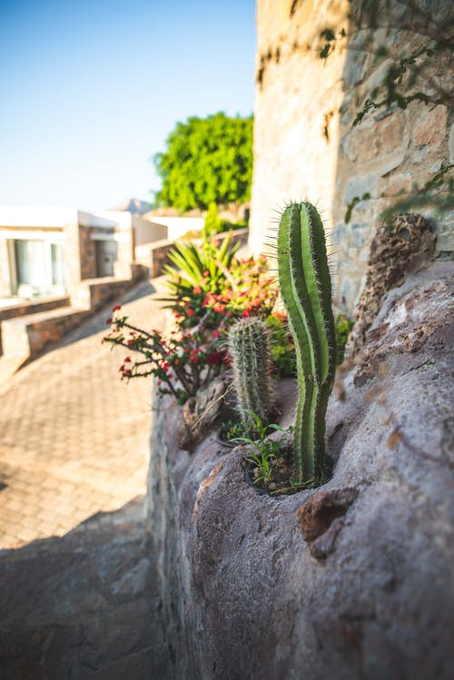 サボテン, フローラ, 夏, 庭園の無料の写真素材