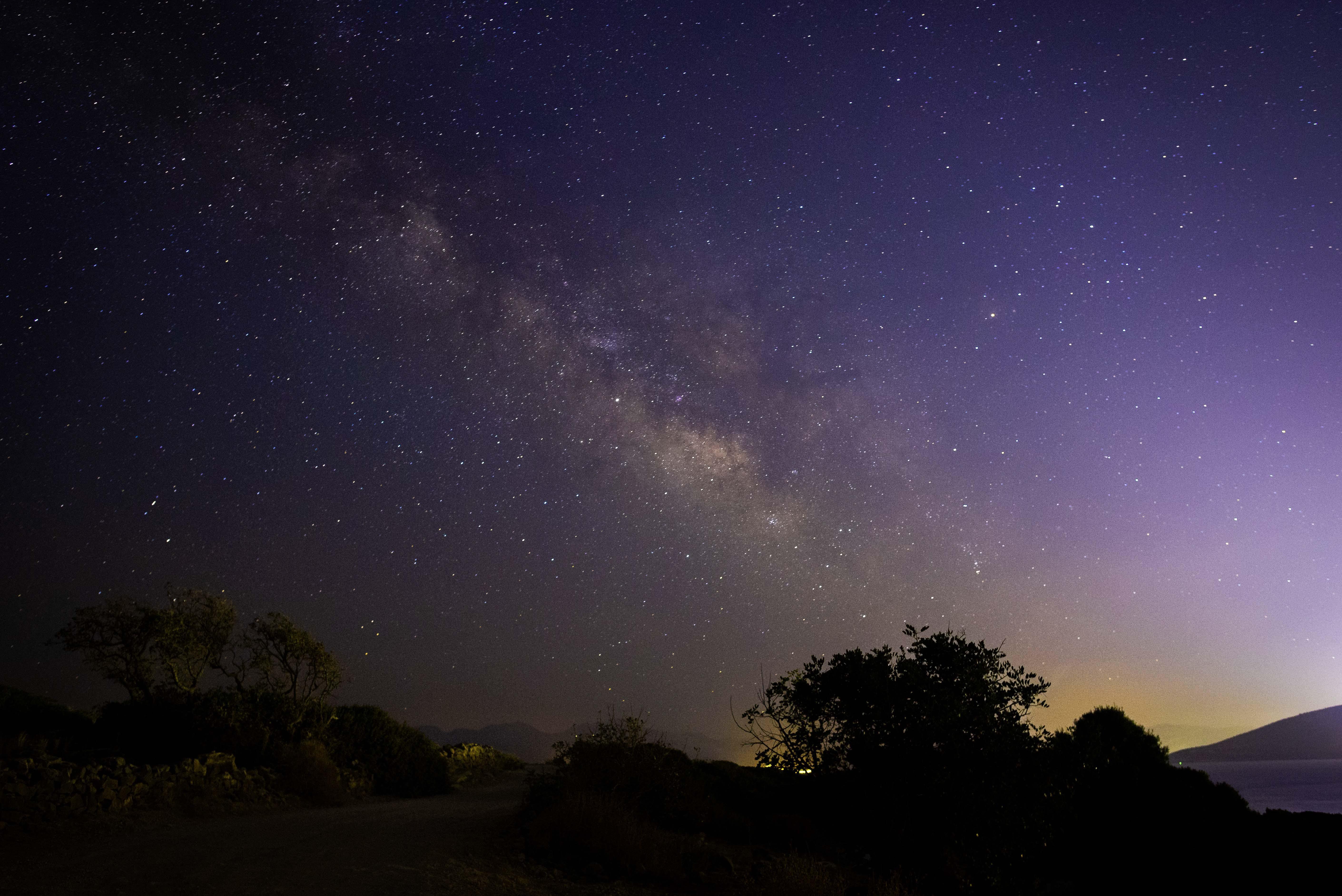 Silhouette of Tree Under Nebula