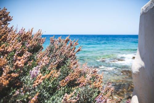 天性, 工厂, 海, 海洋 的 免费素材照片