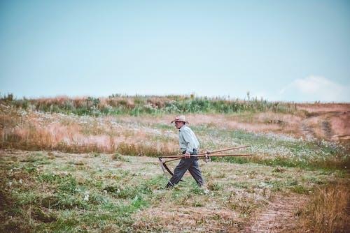 Ingyenes stockfotó aratás, farm, farmer, felnőtt témában