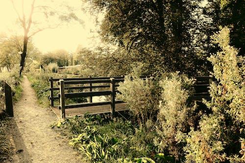 Бесплатное стоковое фото с безмятежный, деревья, мост, парк