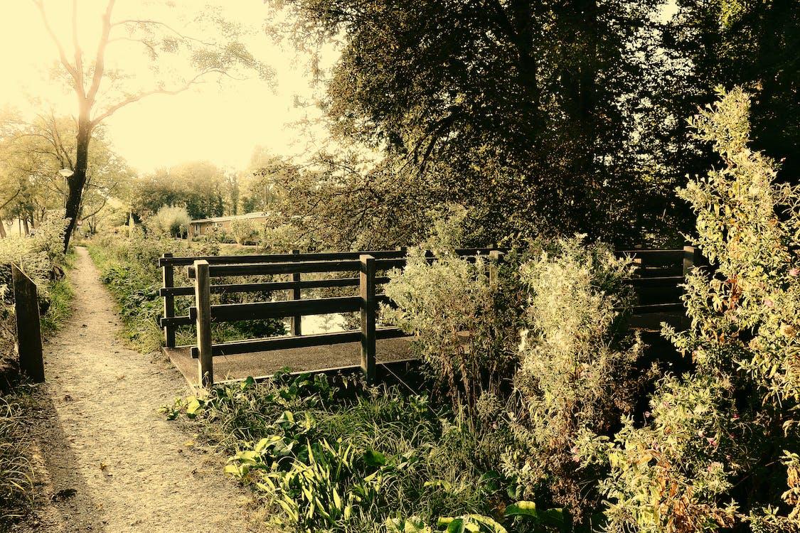 bridge, landscape, park