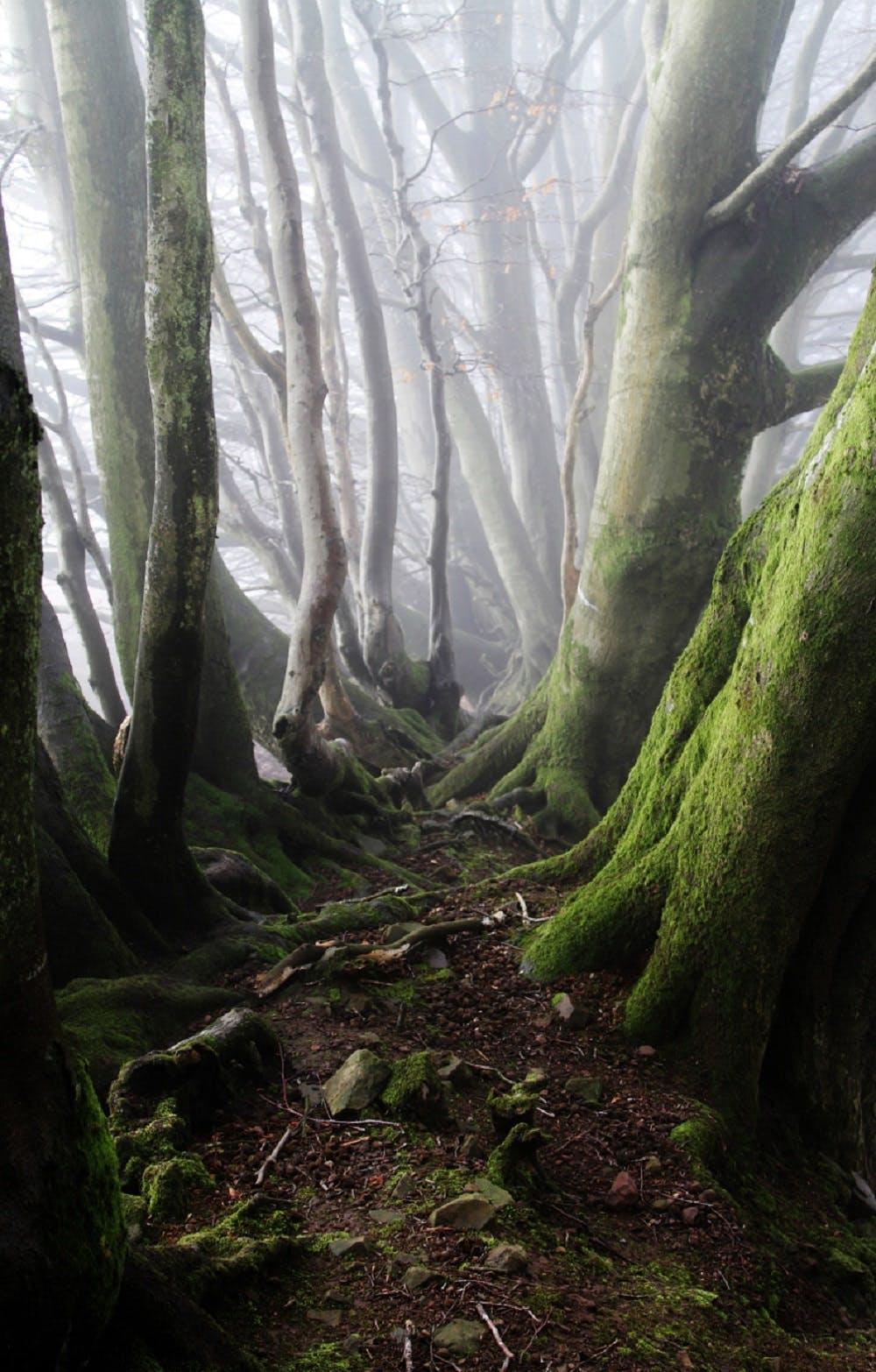 Green Gray Tall Trees