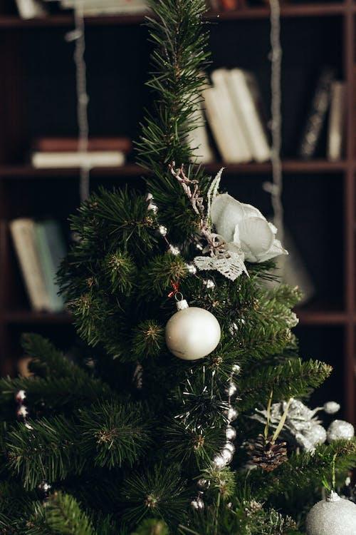 Fotobanka sbezplatnými fotkami na tému dekor, oslava, Vianoce, vianočná výzdoba
