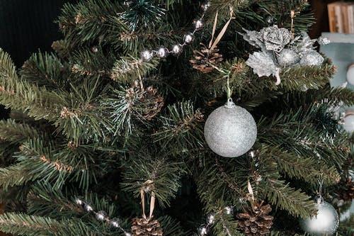 Imagine de stoc gratuită din brad de crăciun, celebrare, Crăciun, decor
