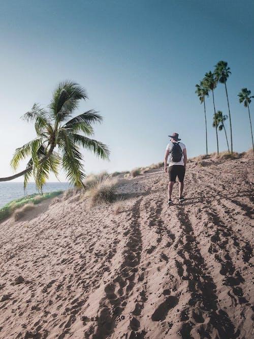Free stock photo of beach, blue sky, climbing, discover