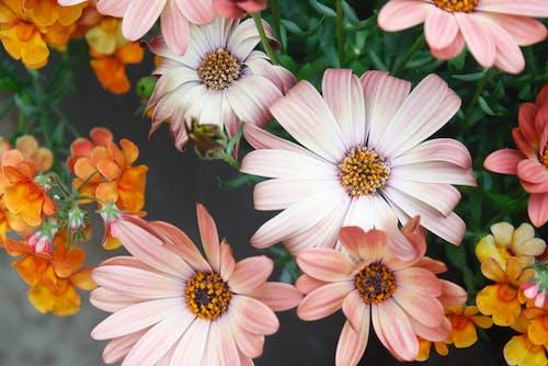 Δωρεάν στοκ φωτογραφιών με ανθίζω, άνθος, εργοστάσιο, λουλούδια
