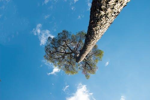 Gratis lagerfoto af særlig, træ