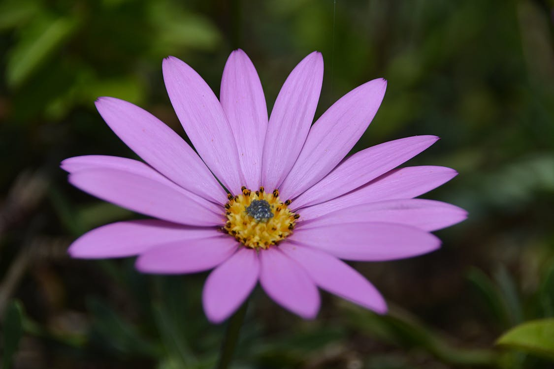 Purple Petal Flower